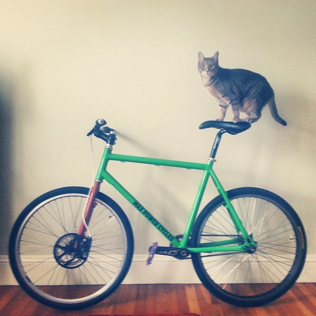 #catpower #maxpower cycles #newbikeday #catsofinstagram #catsofbikepolo #bikepolo #bostonbikepolo