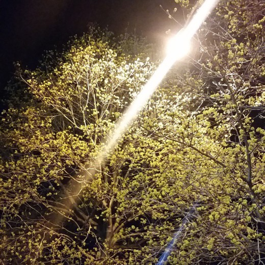 bostonbikepolo-bikepolo-fridaynightBIGlights-summerisalmosthere